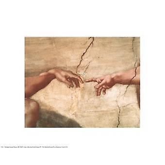 Etableringen av Adam (detalj) Poster trykk av Michelangelo Buonarroti (20 x 16)