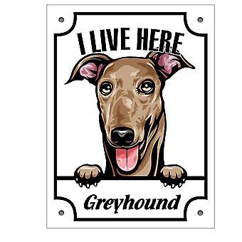 Cínová doska Greyhound Kikande pes podpísať