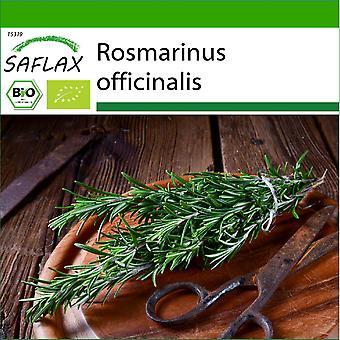 Saflax - 40 seeds - With soil - Organic - Rosemary - BIO - Romarin - BIO - Rosmarino - Ecológico - Romero - BIO - Rosmarin