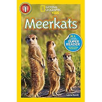 Leitores de geográficos nacionais: Meerkats