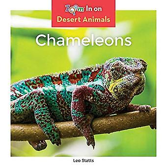 Chameleons (Desert Animals)