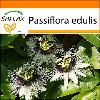 Saflax - Garden in the Bag - 40 seeds - Purple Granadilla - Grenadille - Maracuja - Fruta de la pasión - Purpurgranadilla