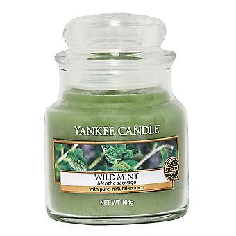 Yankee Kynttilä Pieni purkki Kynttilä Wild Mint