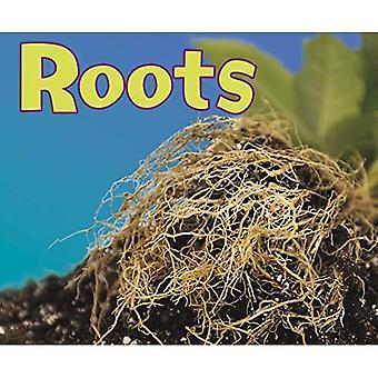 Wortels (Pebble Plus: delen van planten)