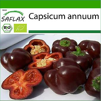 Saflax - 10 Samen - Mit Erde - Bio - Süßpfeffer - Süße Schokolade - BIO - Poivron - Chocolat doux - BIO - Peperone - Süße Schokolade - Ecol'gico - Pimiento - Chocolate Dulce - BIO - Paprika - Sweet Chocolate