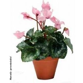 Artificial Silk Cyclamen Bush