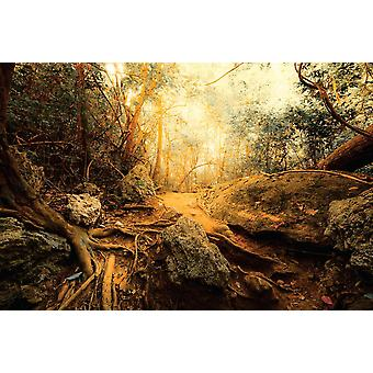 Wallpaper Mural Fantasy Jungle Forest (400x260 cm)
