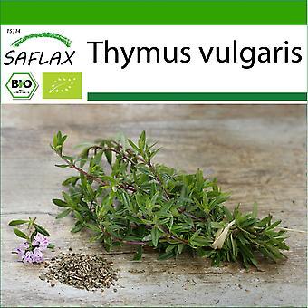Saflax - 800 Samen - Mit Erde - Bio - Thymian - BIO - Thym - BIO - Timo - Ecol'gico - Tomillo - BIO - Thymian
