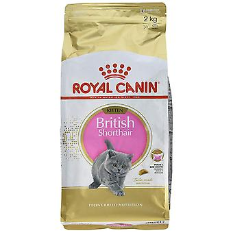 Royal Canin British Short Hair Kitten Food