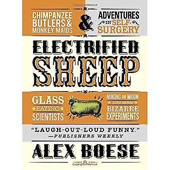 Moutons électrifiée