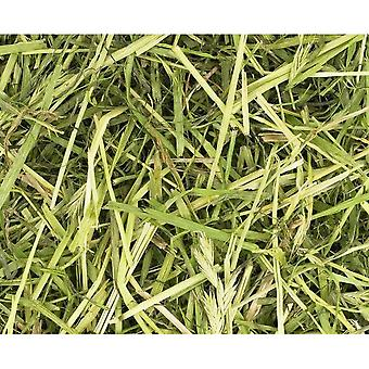 Friendly Readigrass Small Pet Feed
