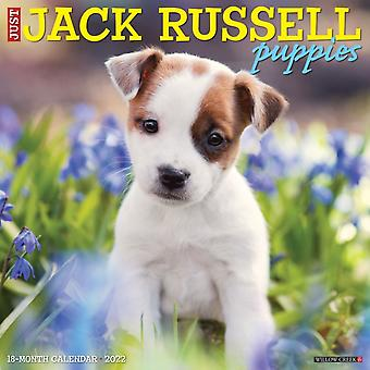 Just Jack Russell Puppies 2022 Wall Calendar Dog Breeds by Willow Creek Press