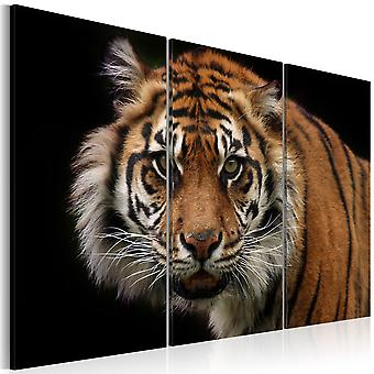 Wandbild - Wilder Tiger