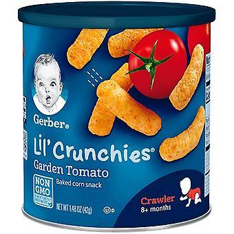 جيربر ليل ' الجرش الحديقة الطماطم