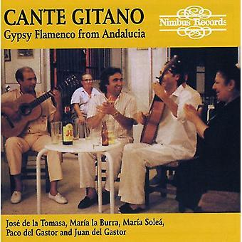 Cante Gitano - Gypsy Flamenco från Andalusien [CD] USA import