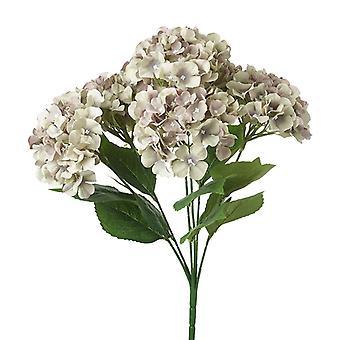 Hydrangea Wtih Soft Faded Purple Petals