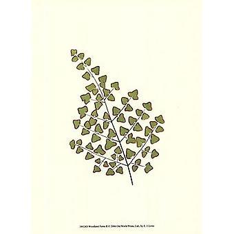 Woodland Ferns II Poster Print by EJ Lowe (10 x 13)