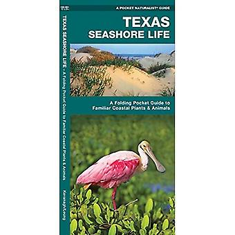Texas Seashore Life, 2nd Edition: A Folding Pocket Guide to Familiar Coastal Plants & Animals (Pocket Naturalist Guide)