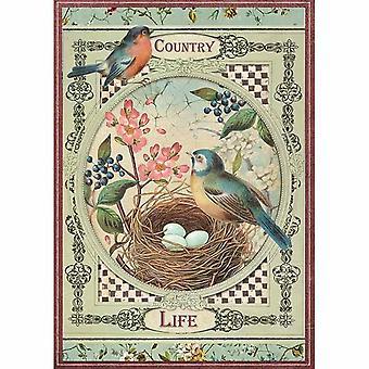 ورقة الأرز A4 الطيور الحياة القطرية (DFSA4352)