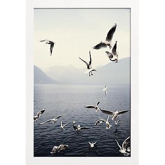 JUNIQE Print - Måger - Måger Plakat i blå og hvid