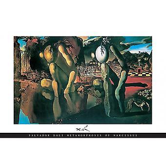 Salvador Dali metamorfosis cartel impresión metamorfosis de Narciso cartel Poster Print