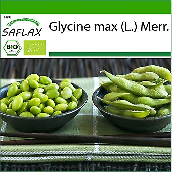 Saflax - 8 graines - Avec sol - Bio - Edamame - BIO - Haricot - Edamame - BIO - Soia - fagioli Edamame - Ecológico - Alubia - Edamame - BIO - Bohne - Edamame