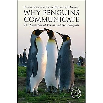 Why Penguins Communicate: The Evolution of Visual and Vocal Signals