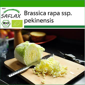Saflax - 40 frø - Med jord - Organisk - Kinesisk kål - Granat - BIO - Chou chinois - Granat - BIO - Cavolo cinese - Granat - Ecológico - Repollo Chino - Granate - BIO - Chinakohl - Granat