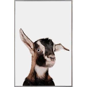 JUNIQE Print -  Goat - Haus- & Bauernhoftiere Poster in Braun & Weiß