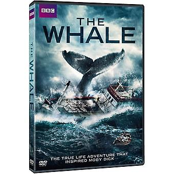 Whale [DVD] USA import