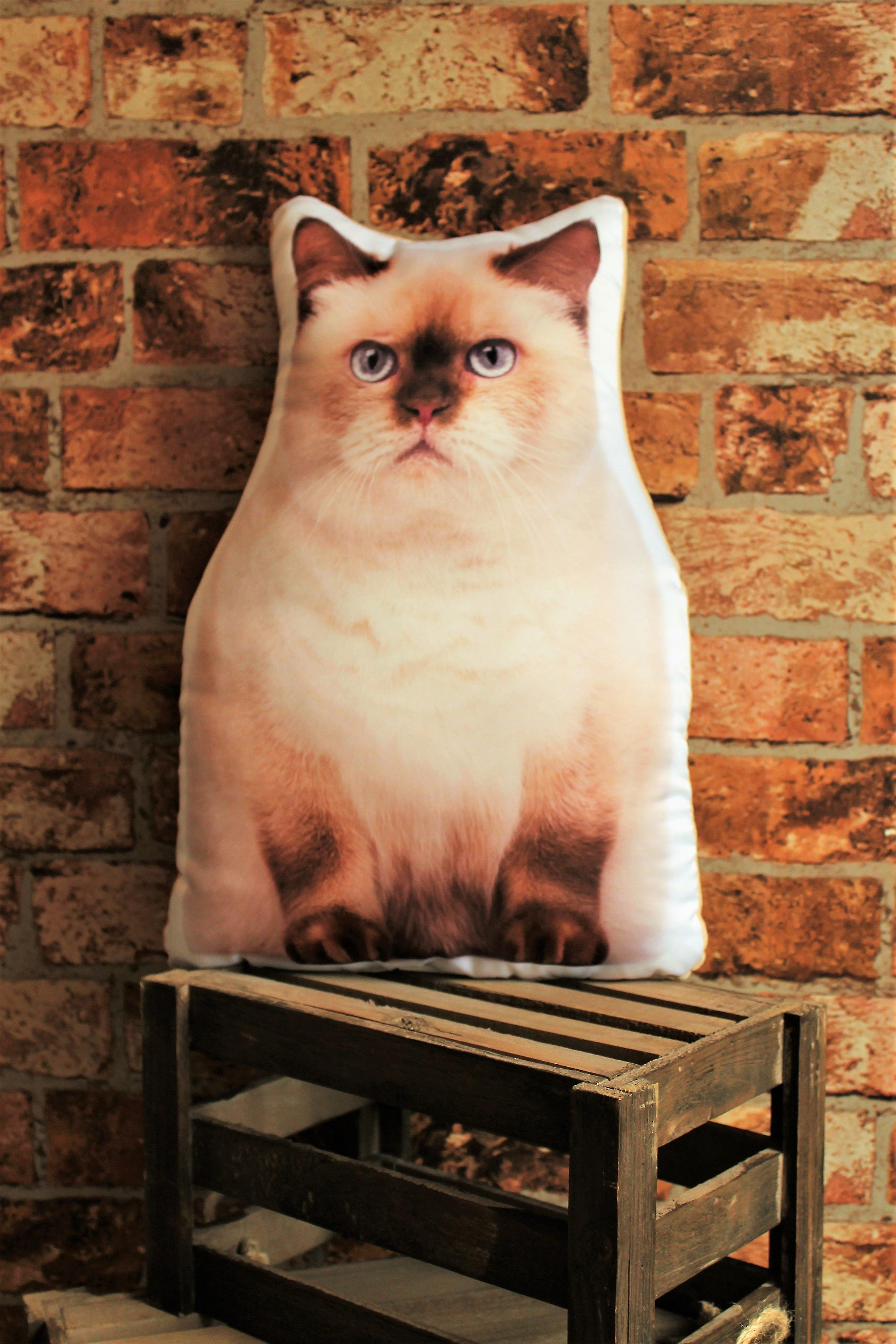 Adorable british shorthair cat shaped cushion