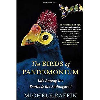 Les oiseaux du Pandémonium: vie entre l'exotisme et la disparition