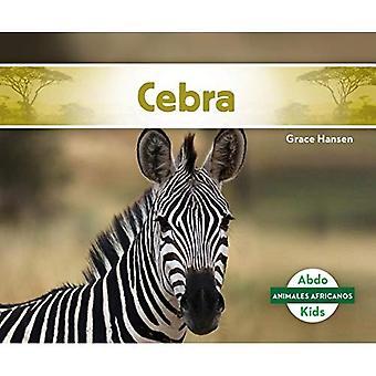 Cebra/ Zebra (Animales Africanos/ African Animals)