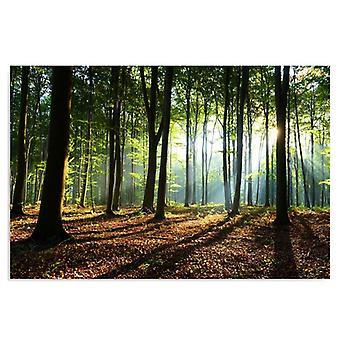 Painel de Deco, raias do sol na floresta