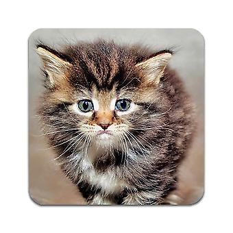 2 ST Maine Coon Kittens Coasters