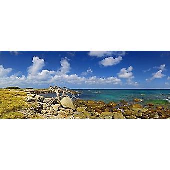 Rochas na costa de Aruba Poster Print