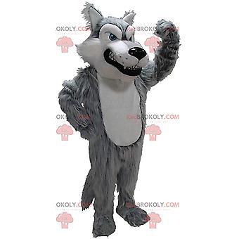 Maskottchen REDBROKOLY.COM aus grauem und weißem Wolf, Verkleidung eines bösen haarigen Wolfes