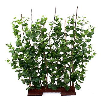 Artificial Eucalyptus hedge 80x85cm