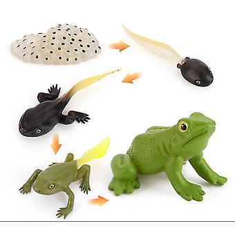 2Pcs צפרדע מיניאטורה סימולציה חרקים מחזור מדע וחינוך מודל קוגניטיבי צעצועי למידה של ילדים 4pcs az8888
