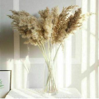 10x Natural Dried Pampas Grass Reed Flower Bunch Bouquet Decor