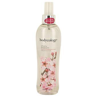 Bodykologia kirsikankukka cedarwood ja päärynä tuoksu sumu spray bodycology 538301 240 ml
