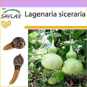 Saflax - 15 graines - Gourde - Calebasse - zucca un bottiglia - Calabaza de peregrino - Afrikanische Riesenkalebasse