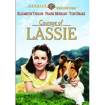 Mut der Lassie [DVD] USA importieren