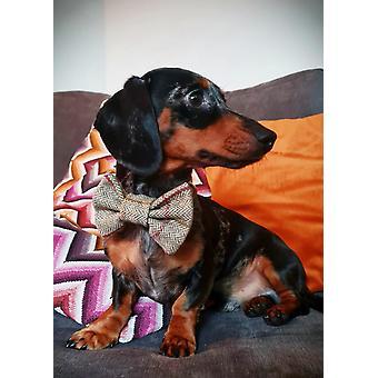 Luxury Vaalea Tweed-koiran kaulapanta rusetti