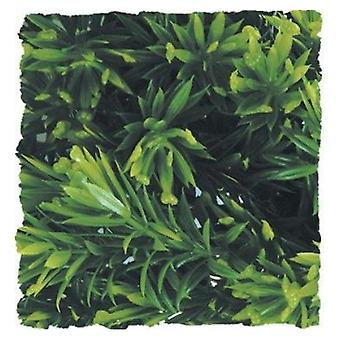 Zoo Med Natural Bushy Borneo Star - 1 count