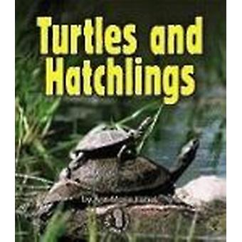 Turtles and Hatchlings by Ann-Marie Kishel - 9780822556473 Book