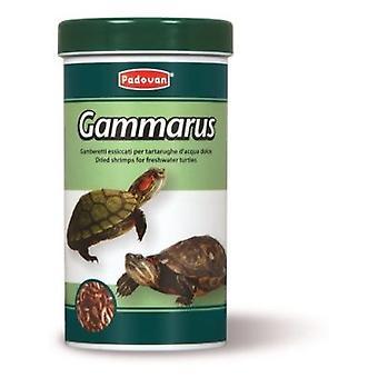 Padovan Mat Gammarus (Reptiler , Reptil mat)