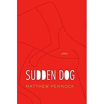 Sudden Dog