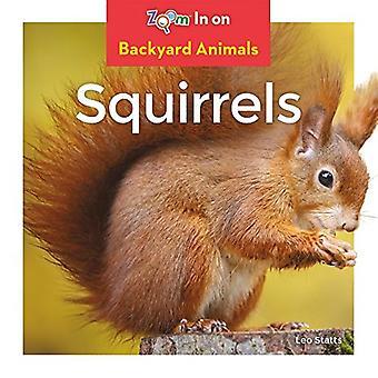 Écureuils (animaux de basse-cour)