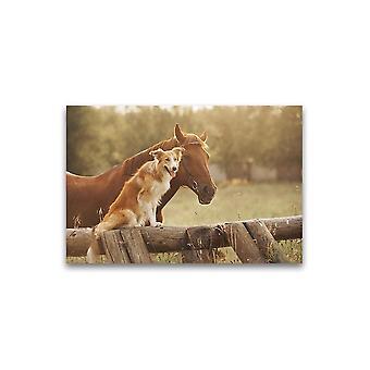 Collie hund og hest ved solnedgang plakat -bilde av Shutterstock